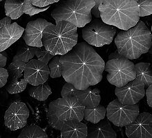 Nasturtium Leaves by Paul Pegler