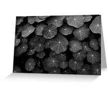 Nasturtium Leaves Greeting Card