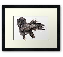 Great Grey Owl, Fluffing Framed Print