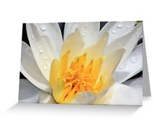 *WHITE FRAGRANT WATER LILY* Greeting Card