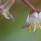 Pink flower macro by Julie Sherlock