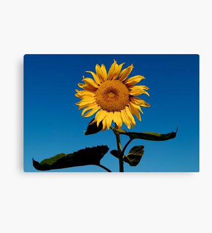 Sun Worshiper Canvas Print