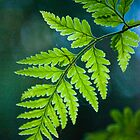 the frond by Greg Carrick