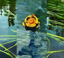 NENUPHARS JAUNE DU QUEBEC (native Quebec aquatic flower) by Carole Boudreau