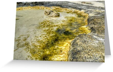 Sea Moss on the Beach in Western Nassau, The Bahamas by Jeremy Lavender Photography