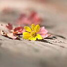Summer's Last Flower by yuhsuan