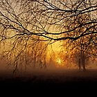 Misty April morning - Denmark by Trine