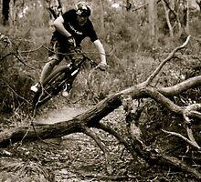 Fallen tree.. by Jakin Gale