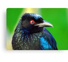 """""""And you call me a Drongo!"""" Canvas Print"""