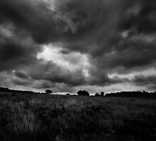 Ashdown forest by ElsaLiimatainen