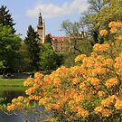 Castle behind a yellow curtain of flowers by christopher363
