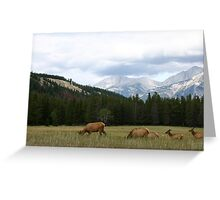 Jasper Elk Greeting Card