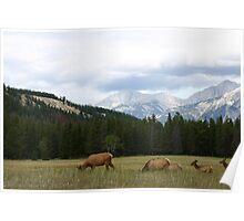 Jasper Elk Poster