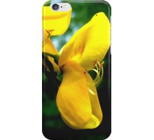 Scottish Broom Flower  iPhone Case/Skin
