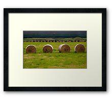 Bales of hay Framed Print