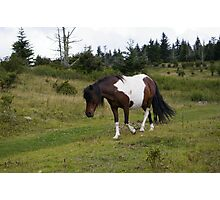 Grayson Highlands Pony Photographic Print