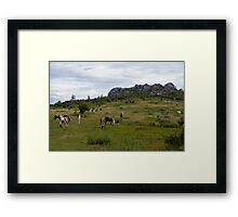 Grayson Highlands Ponies Framed Print