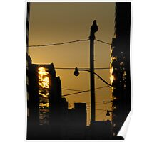 Sunrise In Downtown Toronto  Poster