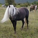 Grayson Highlands Pony by bcollie