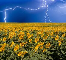 Storm on the Sunflower Field Horizon by Bo Insogna