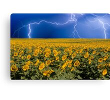 Storm on the Sunflower Field Horizon Canvas Print