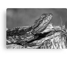 Black and White Baby Bearded Dragon Canvas Print