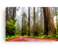 Giant Redwoods in the Mist, California, USA Canvas Print