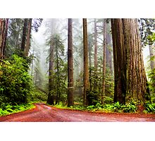 Giant Redwoods in the Mist, California, USA Photographic Print