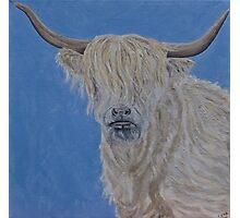 Highland Cow Photographic Print