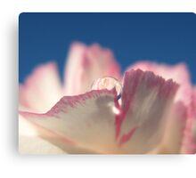 Carnation Drops VI Canvas Print