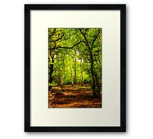 Woodland Clearing Framed Print