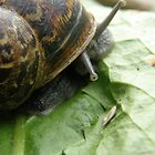Slimy Snail by Lorna Boyer