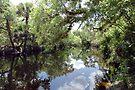 Fisheating Creek Scenic by Larry  Grayam