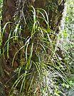Grass on tree by Larry  Grayam