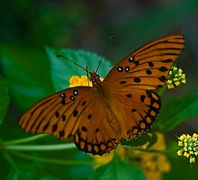 Butterfly by Rick  Bender