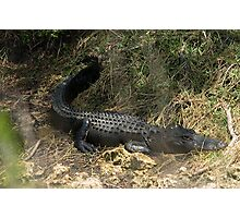 Alligator in weeds Photographic Print