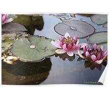 Lotus, Lily-pad, & Lincoln Poster