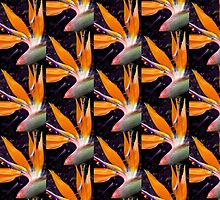 Bird of Paradise by Roz McQuillan
