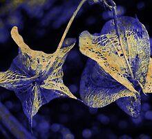 Indigo Blue III by Lynne Haselden