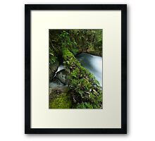 Fern Log Framed Print