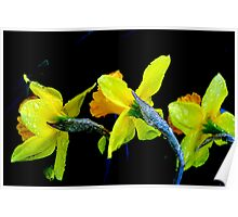Daffodil Frosting Poster