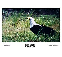 Limited Edition prints - Avian Photographic Print