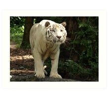"White Tiger ""Omar"" Art Print"
