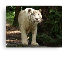"White Tiger ""Omar"" Canvas Print"