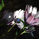Solace Plants Beauty, Outstanding in Richness by Lozzar Flowers & Art