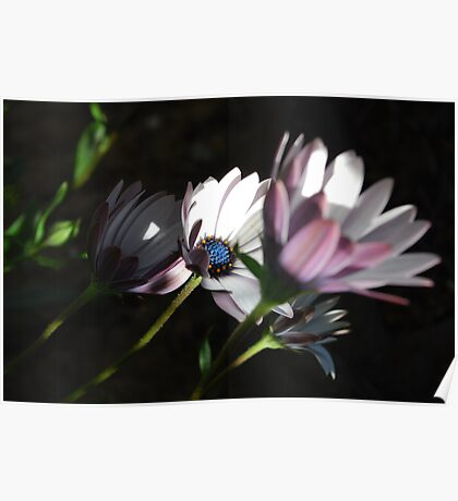 Solace Plants Beauty, Outstanding in Richness Poster