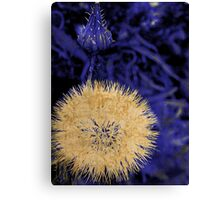 Indigo Blue II Canvas Print