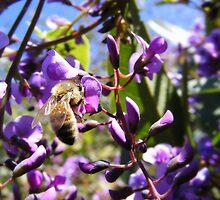 Wandering Bee by Sylvspics