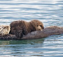 Furry Sea Otter