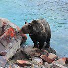 Bear crossing by zumi